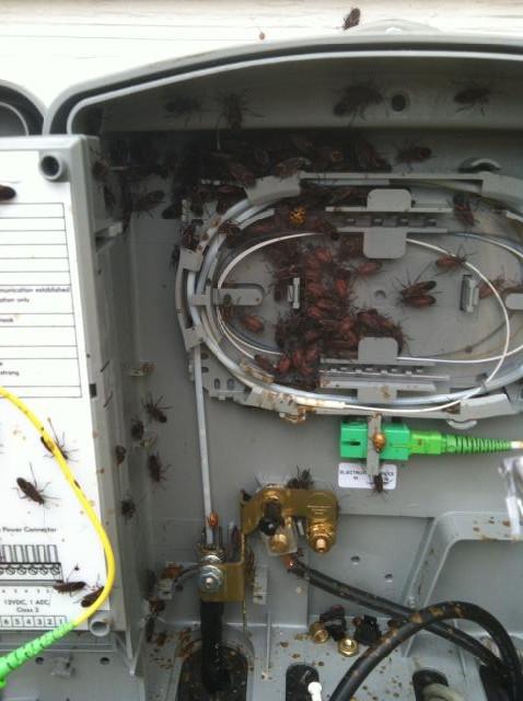Figure 1: Box Elder Bugs Inside an Optical Network Unit.