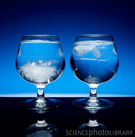 Figure 1: Heavy Water Ice Cubes Sink in Water (Left) While Ordinary Ice Cubes Float in Water (Right).